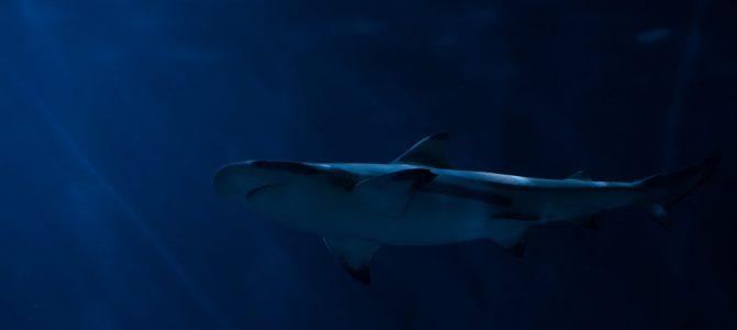 Dive the Big 5 – One Week ALIWAL Special